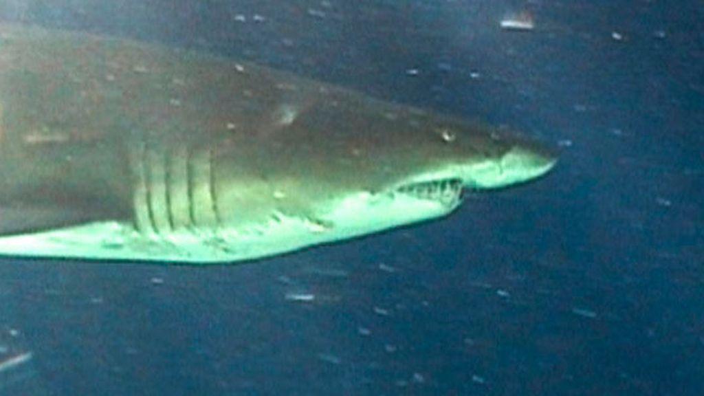 Tiburones en Mar de Plata