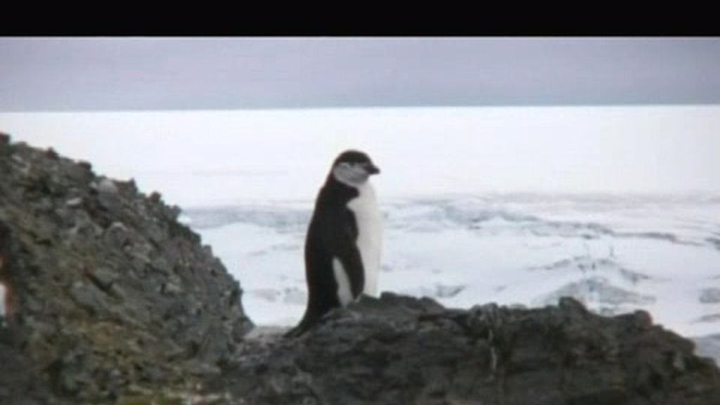 Y en la Antártida... ¡pingüinos!