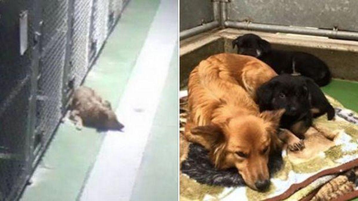 Una perra consuela a unos cachorros huérfanos