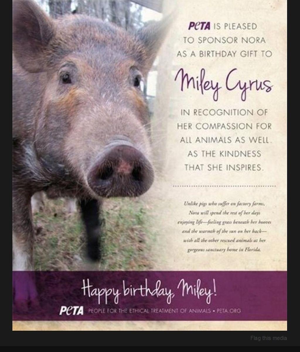 Miley Cyrus recibe un cerdo como regalo de cumpleaños