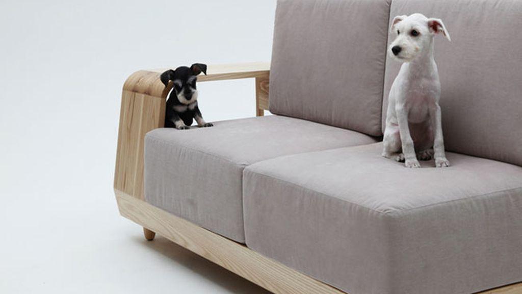 Las mascotas ya pueden dormir en el sofá