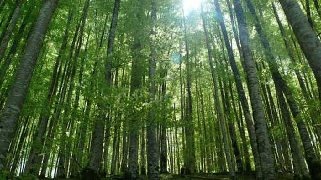 Lugar único para los amantes del bosque