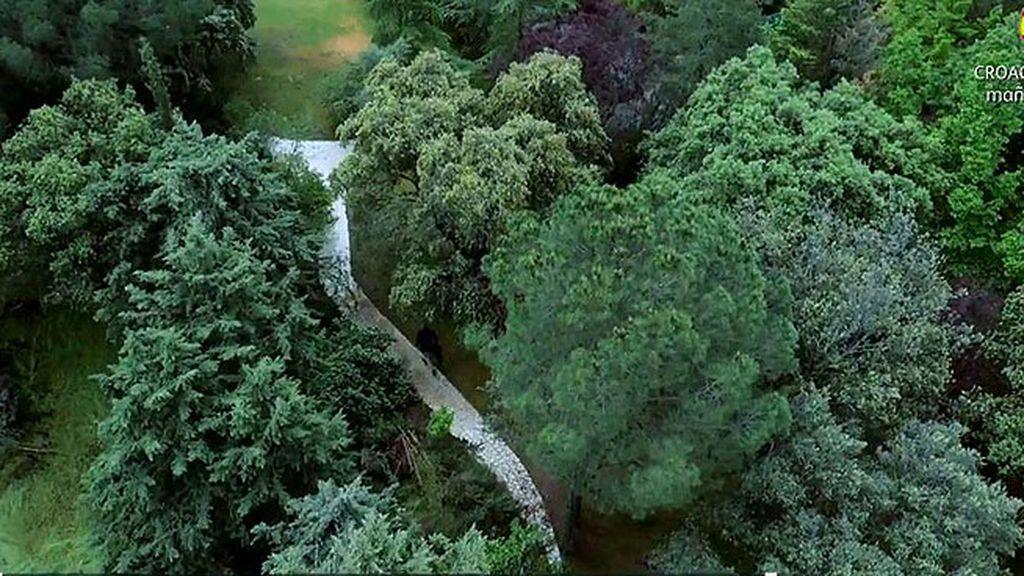 Los invitados tienen que atravesar un 'bosque' para llegar a la casa