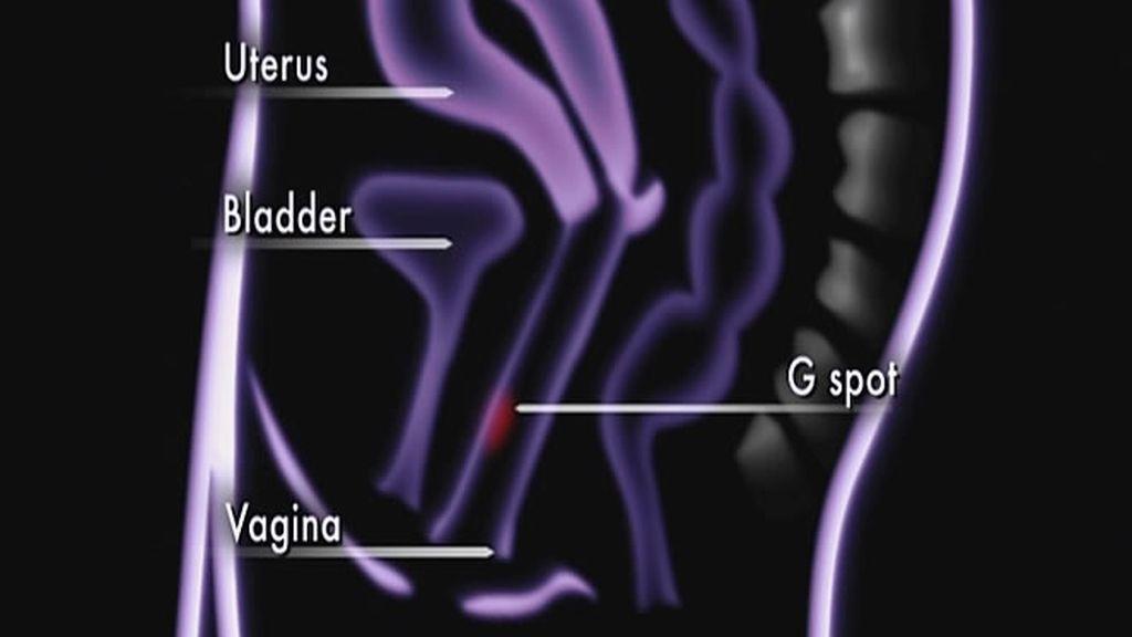 Ubicación exacta del punto G femenino, una de las partes donde se concentra la excitación sexual de las mujeres