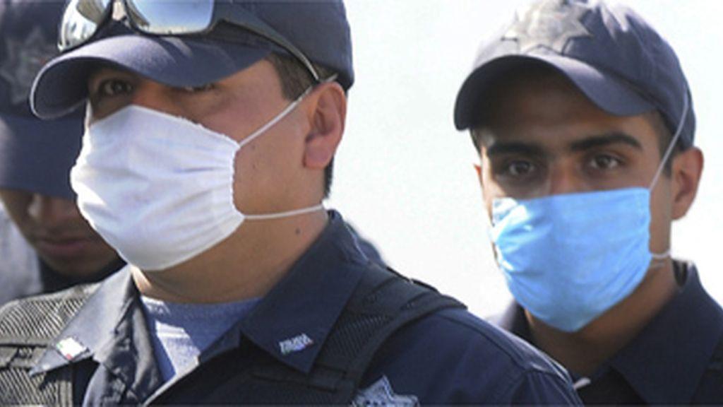 Peste porcina en México