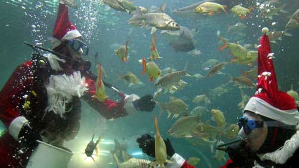 Navidades acuáticas