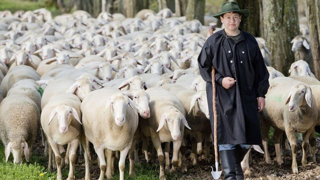 Pastoreo de ovejas en Alemania