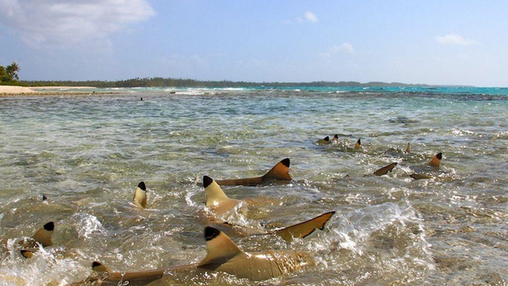 Blue Lagoon, Polinesia