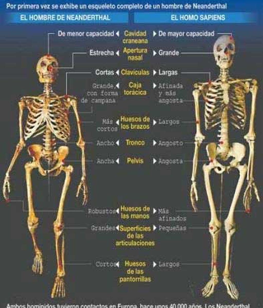 Hasta ahora se pensaba que el Homo Sapiens había sido el único capaz de explorar todos los recursos naturales.