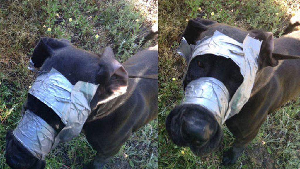 Rescatan a perro que tenía la cabeza cubierta con cinta adhesiva