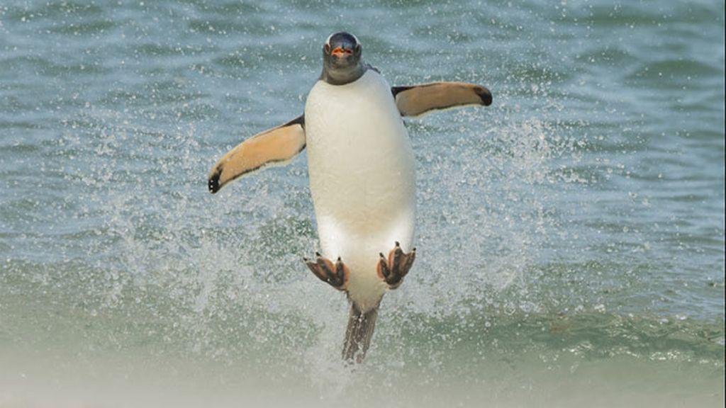 Pingüino sobre las olas, por Tom Way