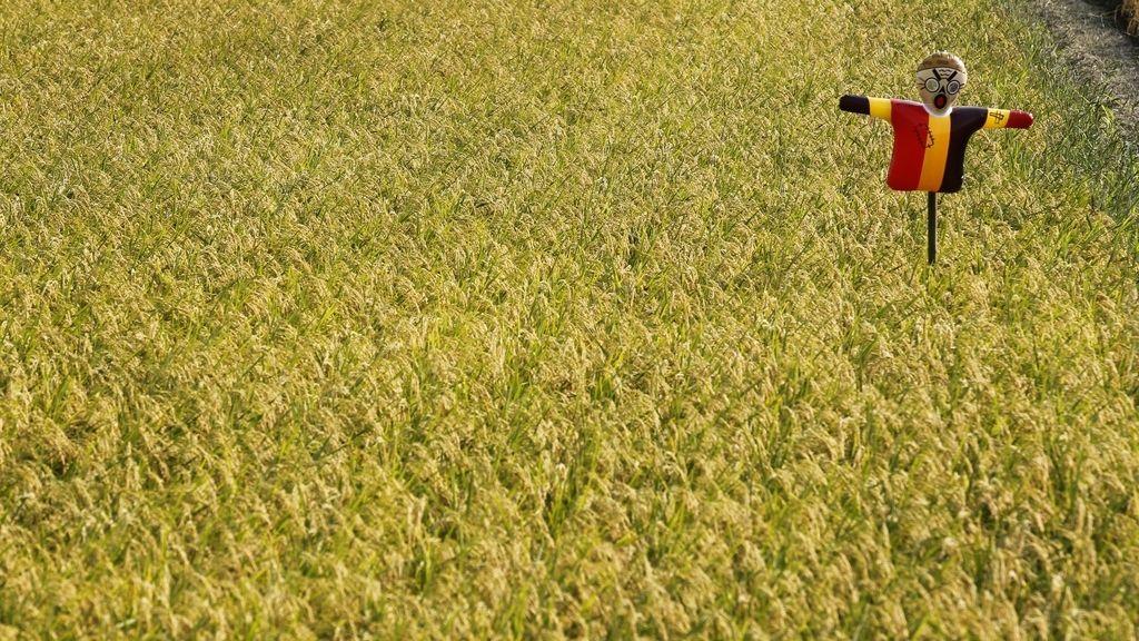 Campo de arroz contaminado con radiación cerca de Fukushima, en Japón
