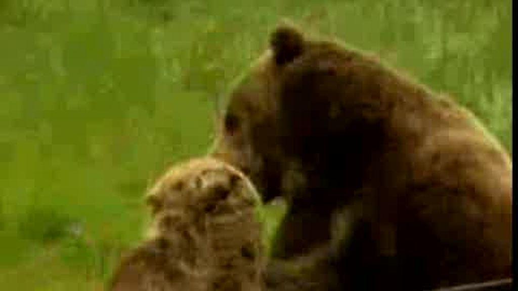 Trío de osos