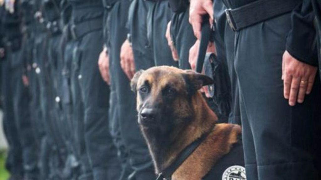 perro policía,diesel,Ataque terrorista Francia