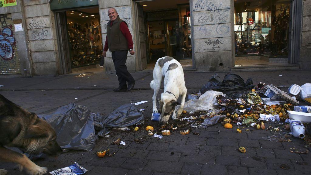 Un perro come en la basura de las calles de Madrid