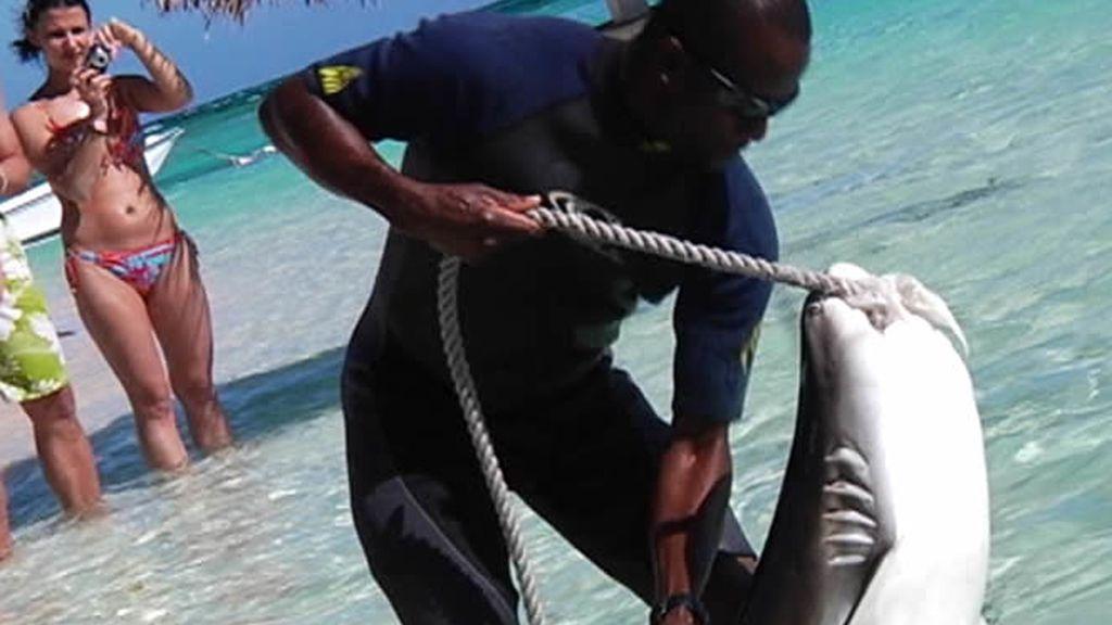 Captura de tiburón