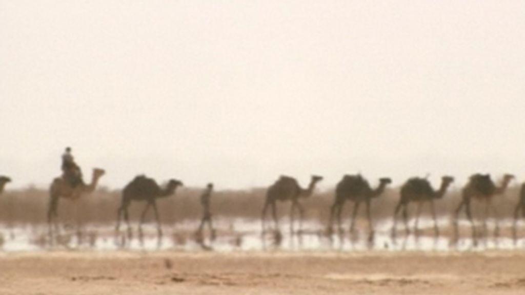 Cómo sobrevivir en el Sáhara