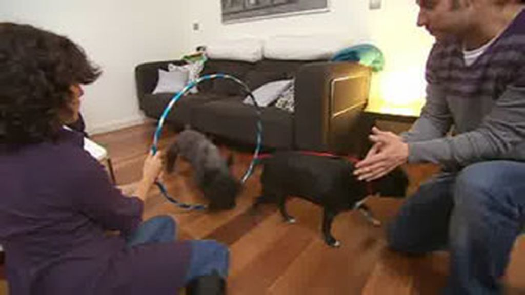 Borja utiliza a su perra Bahía para rehabilitar a Lucky.