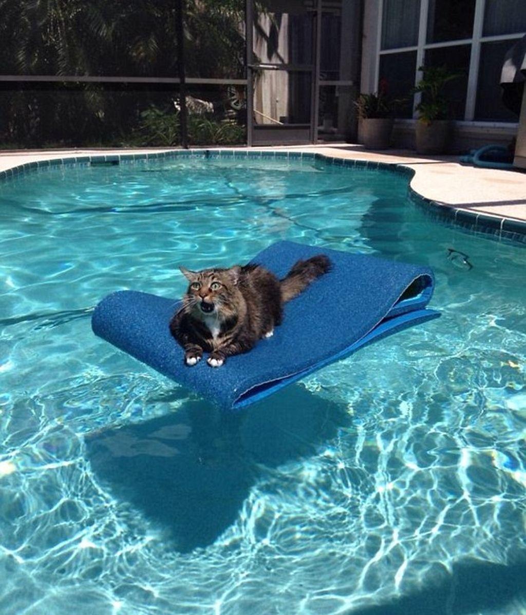 Un gato surfista
