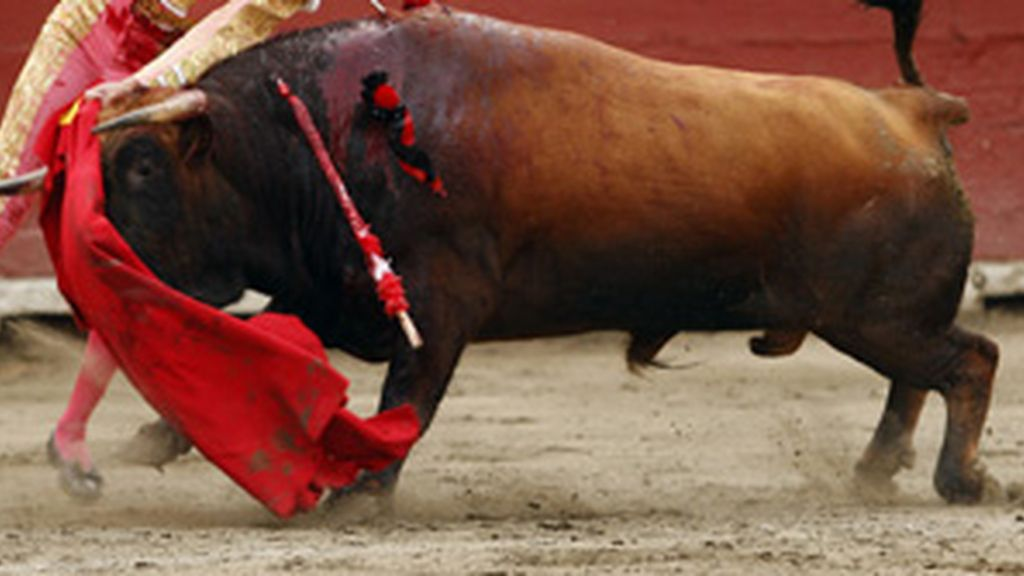 El primer toro bravo clonado de España ha costado 28.000 euros