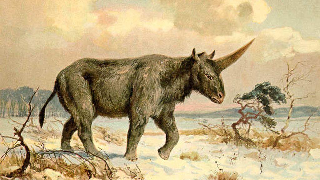 El 'Unicornio Siberiano', Elasmotherium sibiricum