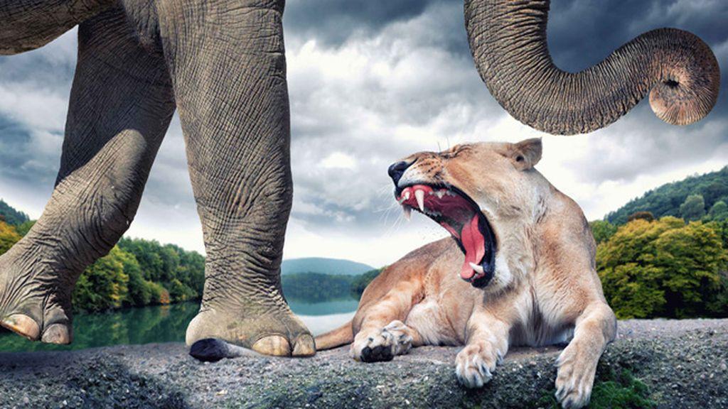 Maravillas del reino animal