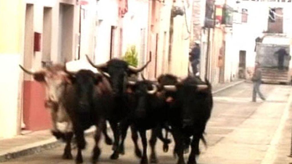 Los toros no faltan en casi ninguna fiesta nacional