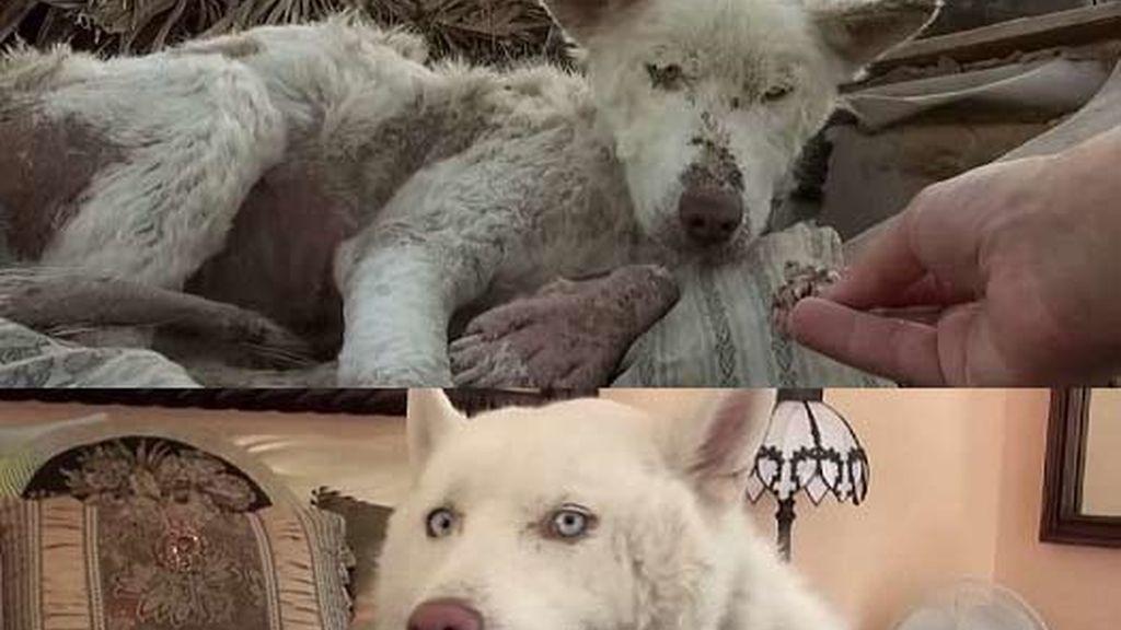 El perro Miley, un año después de encontrarlo en la basura