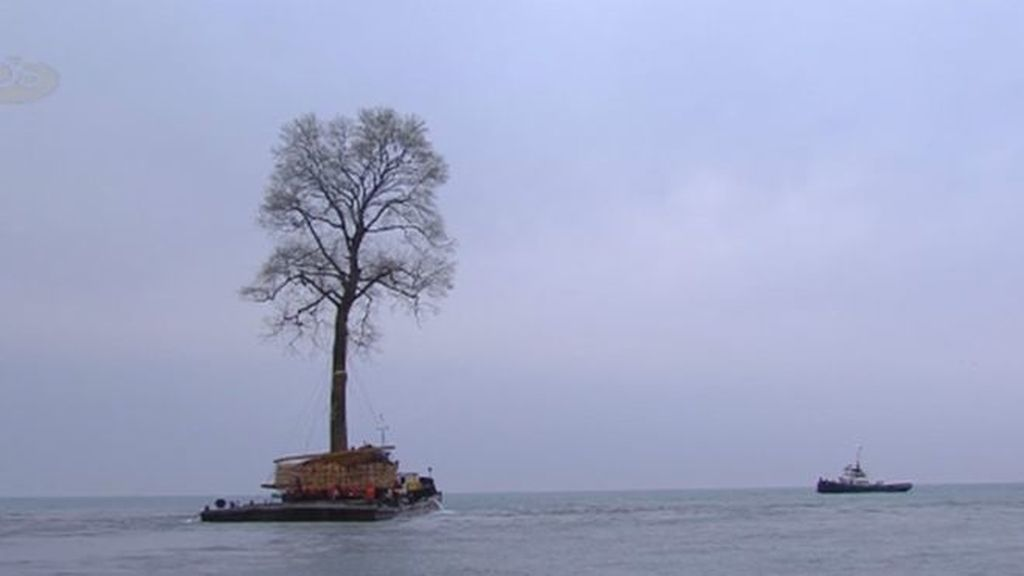 El árbol que surca las aguas del Mar Negro