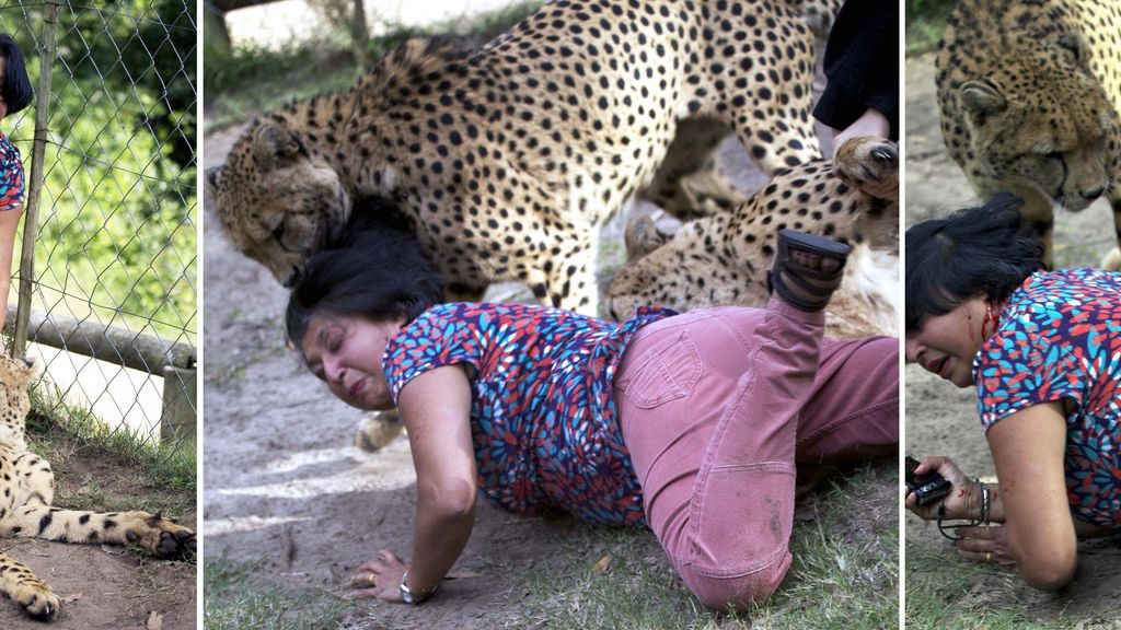 Una turista atacada por dos guepardos en una reserva en Sudáfrica