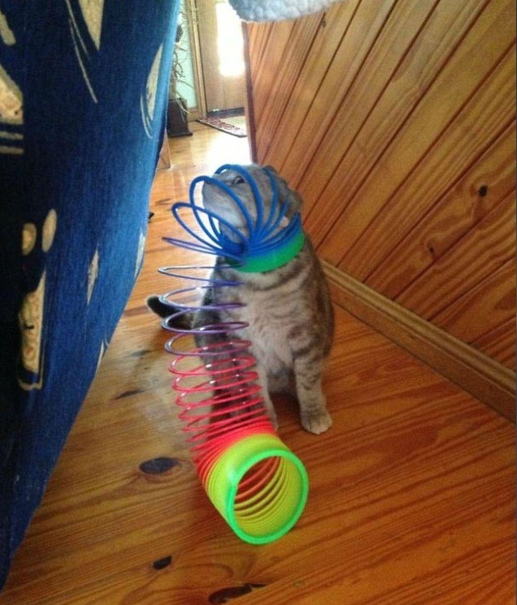 Este juguetón animal está en apuros