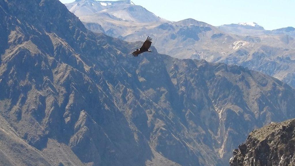 El vuelo del cóndor