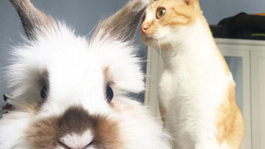 conejo y gato