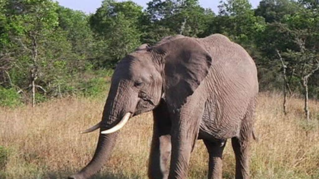 Kenia es uno de los países con más reservas naturales de Africa