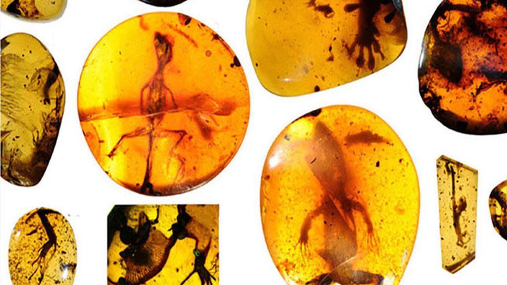 Lagartijas fosilizadas en ámbar