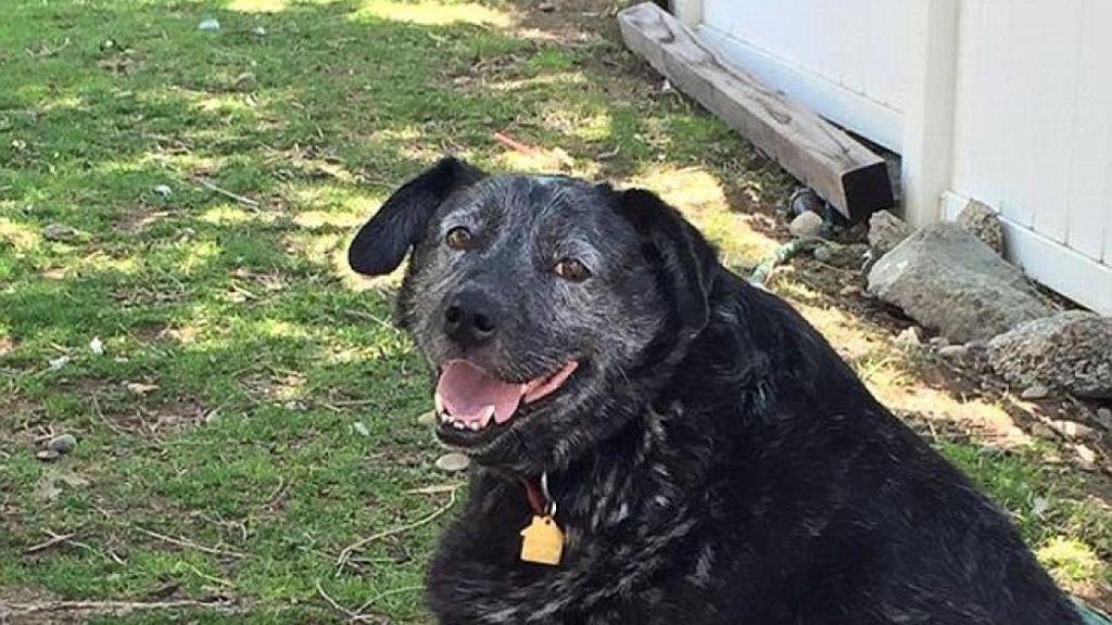 Perro custodia casa de su dueño durante meses, Ricky Bobby