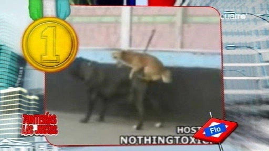 4 en Ranking: Los momentos más eróticos del mundo animal