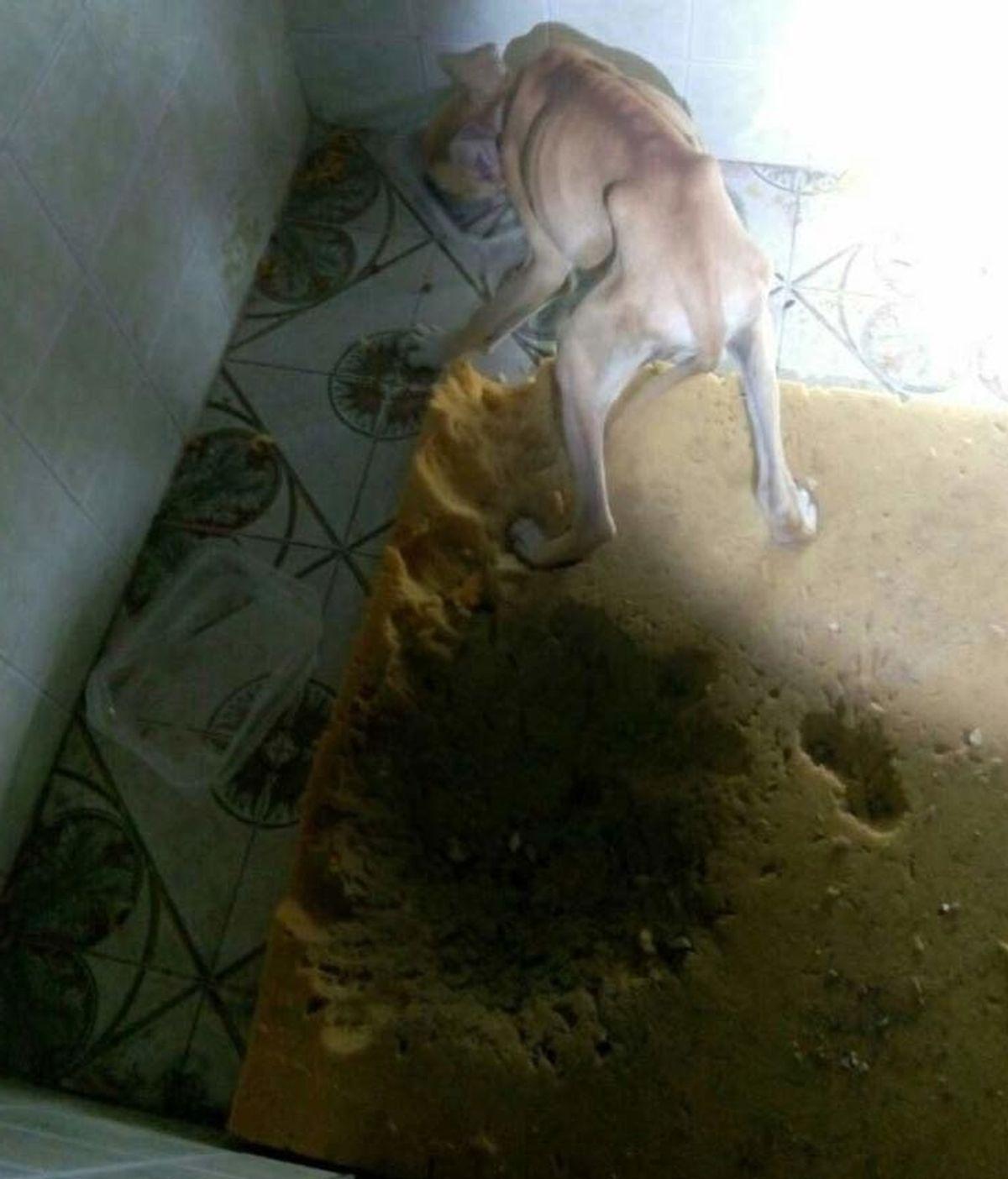 """La Policía recoge a un perro en estado de """"desnutrición"""" tras irse su dueña de viaje"""