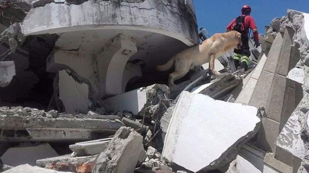 Dayko, el perro de rescate que murió tras salvar vidas en Ecuador