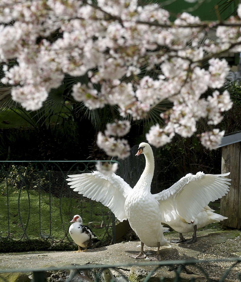 Ya es primavera