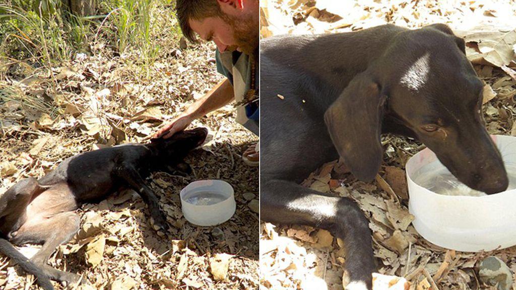 Al límite de sus fuerzas, un perro se desmaya y llora cuando le salvan