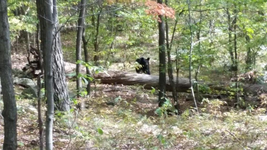 Un joven fotografía un oso justo antes de que se lo coma