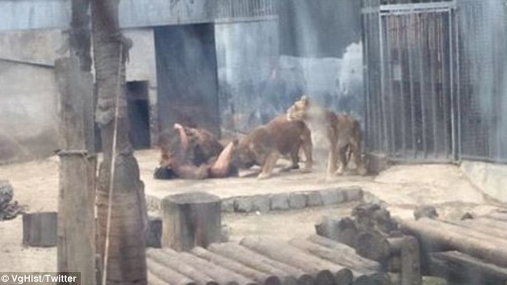 Zoo de chile