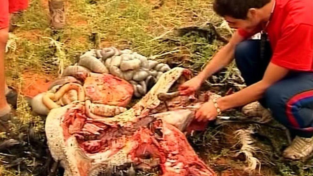 Los hombres de la familia Molina Herrera cumplen el castigo de cazar a un animal