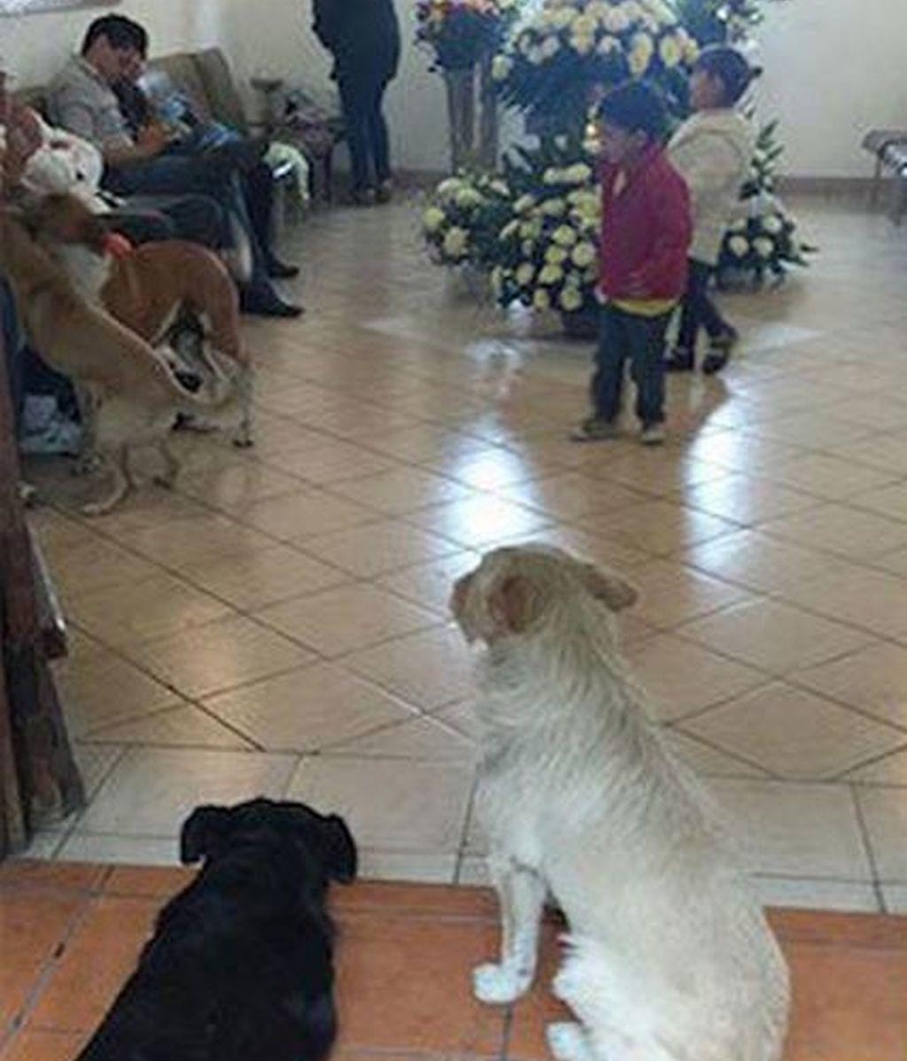 Numerosos perros callejeros asisten al funeral de la mujer que les daba de comer a diario