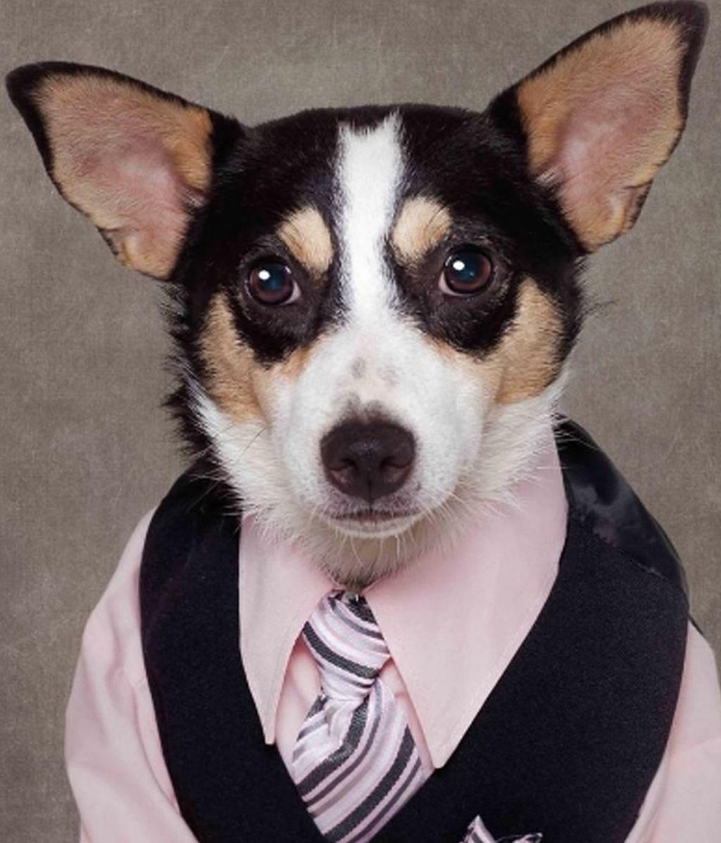 La original ayuda de una fotógrafa para que se adopte perros abandonados