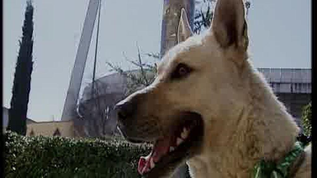 La historia de un perro abandonado