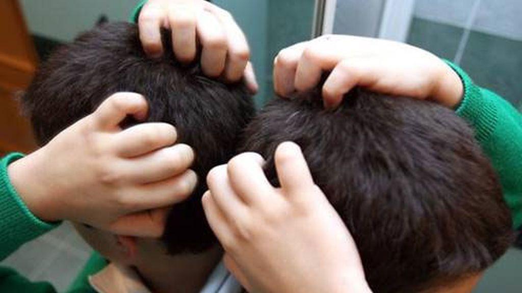 Los piojos afectan al 30% de los menores en edad escolar y al 27% de sus padres
