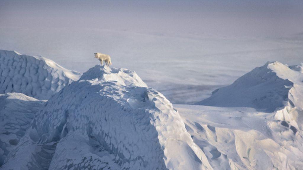 Increíbles imágenes del mundo salvaje