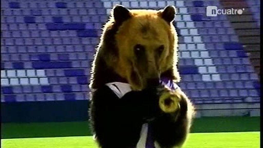 Un oso trompetero en el José Zorrilla